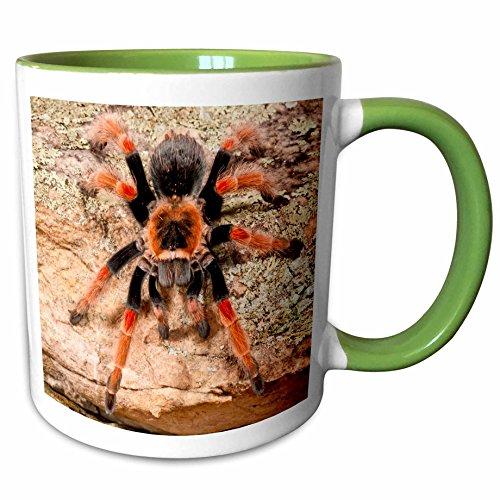 3dRose Danita Delimont - Spiders - Mexican Painted Leg Tarantula Spider - NA02 DNO0853 - David Northcott - 11oz Two-Tone Green Mug mug_140139_7
