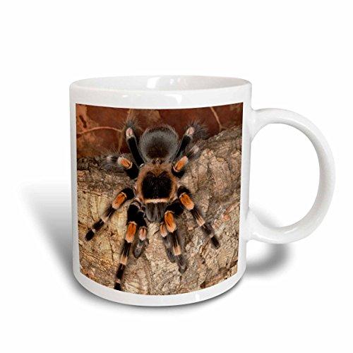 3dRose Mexican Red-Kneed Tarantula Spider Mexico SA13 AJE0001 Adam Jones Ceramic Mug 15-Ounce