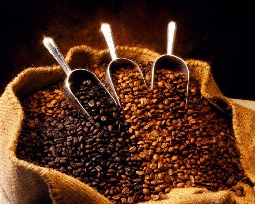 Ethiopian Queen City Harrar Grade 4 Coffee Beans Dark Roast Espresso 5 Pounds Whole Beans