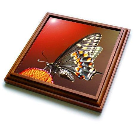 3dRose trv_9048_1 Red Trivet with Ceramic Tile 8 by 8 Brown